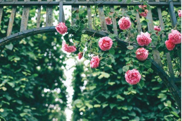 Glenwood Gardens: One of Cincinnati's Best Kept Secrets
