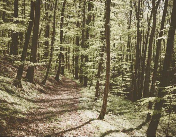 A Guide to Cincinnati's Caldwell Nature Preserve