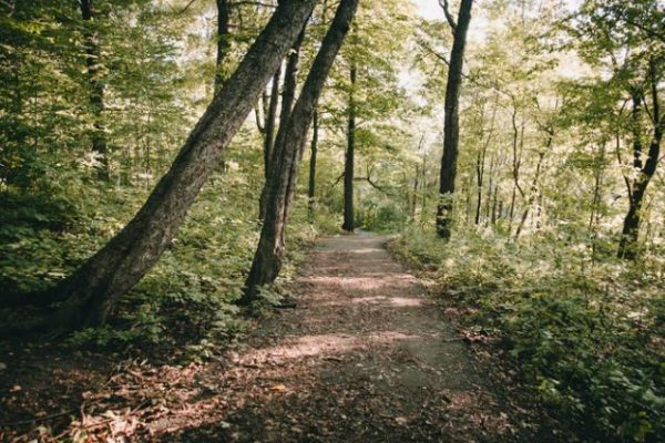 California Woods is One of Cincinnati's Best Hiking Spots