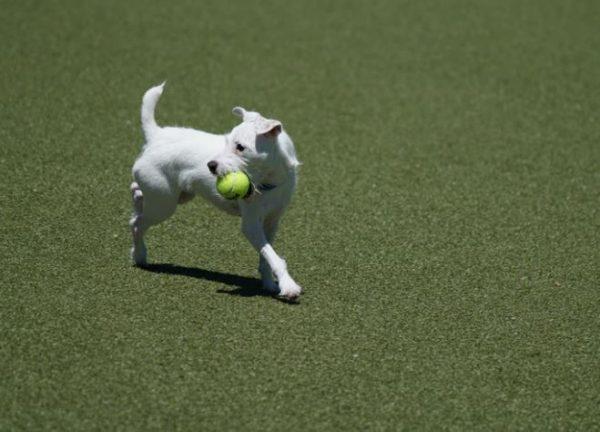 The 13 Best Dog Parks in Cincinnati