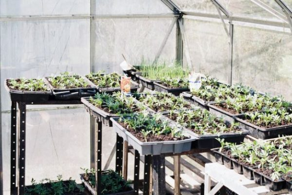 7 Cincinnati Greenhouses Made for Plant Lovers