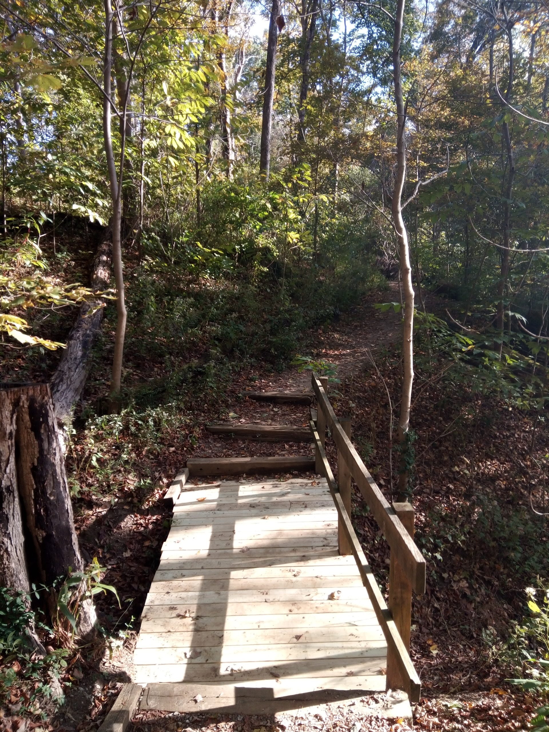 Withrow Nature Preserve in Cincinnati, Ohio