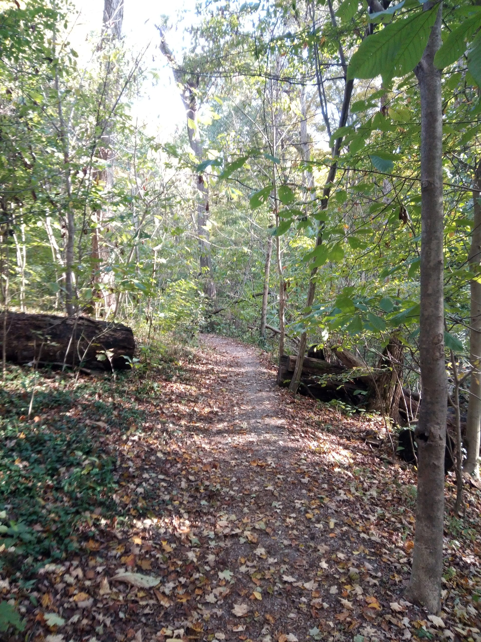 Withrow Nature Preserve hiking trail