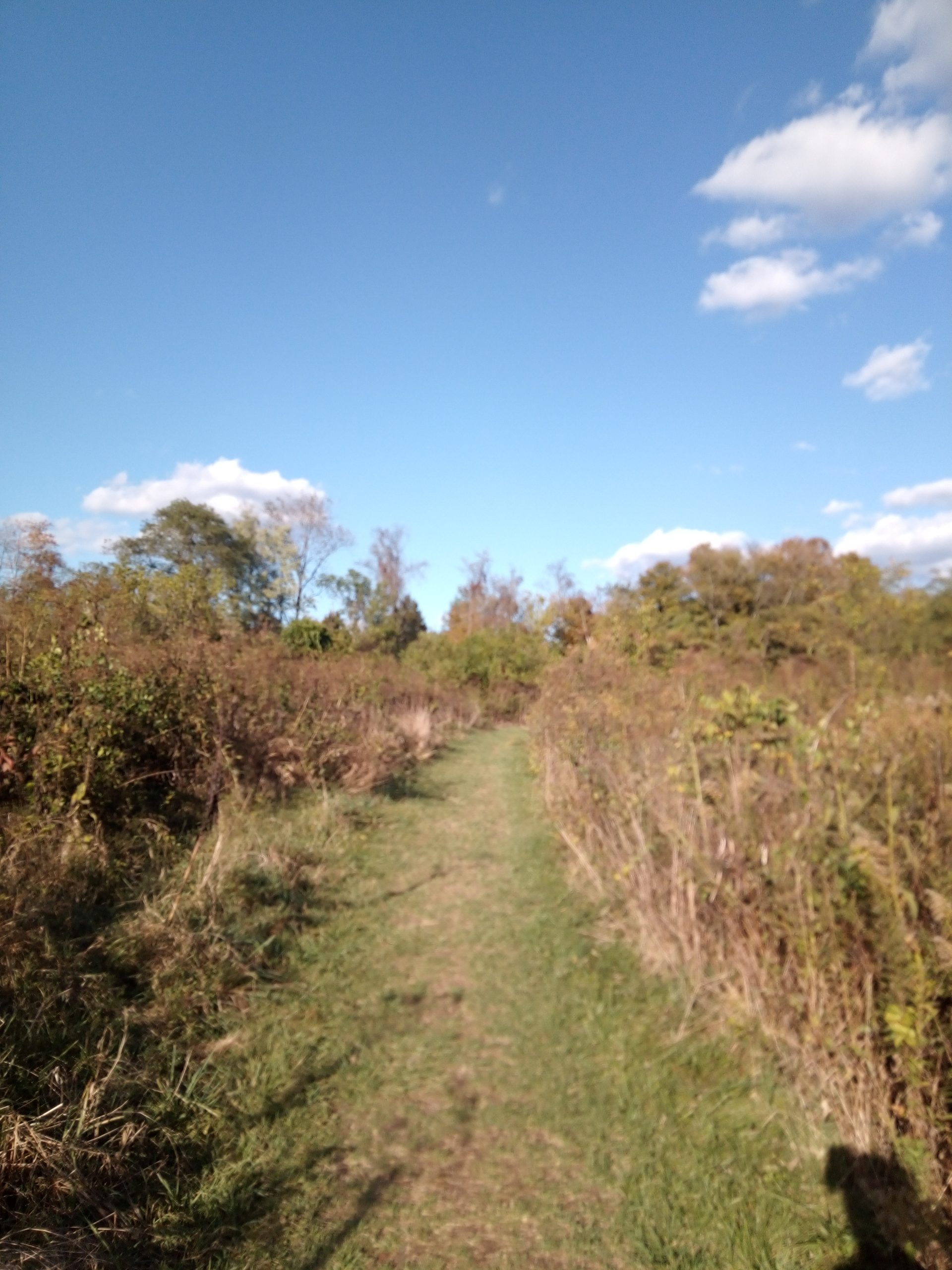 Withrow Nature Preserve meadow loop