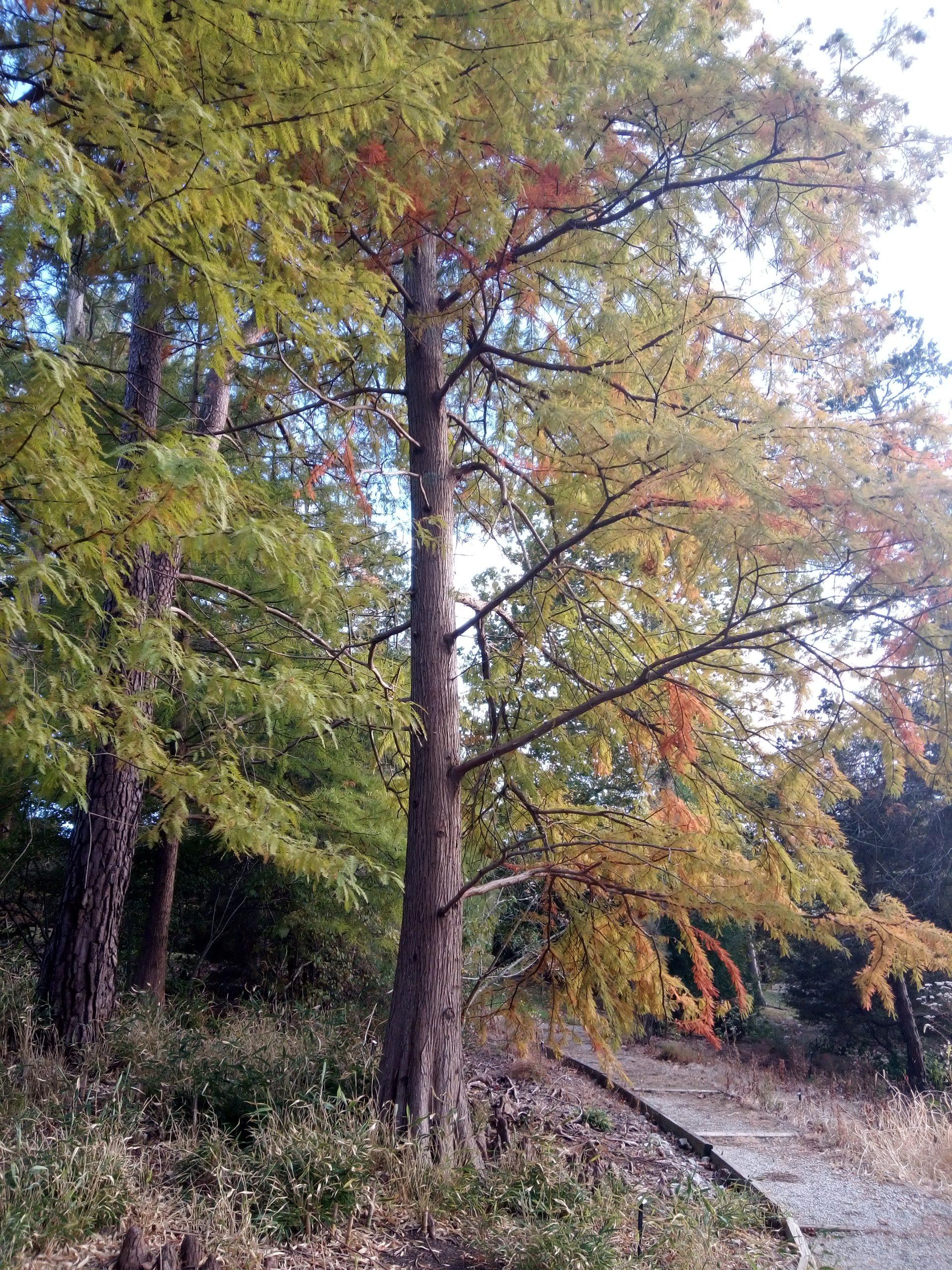 Rowe Arboretum in Indian Hill