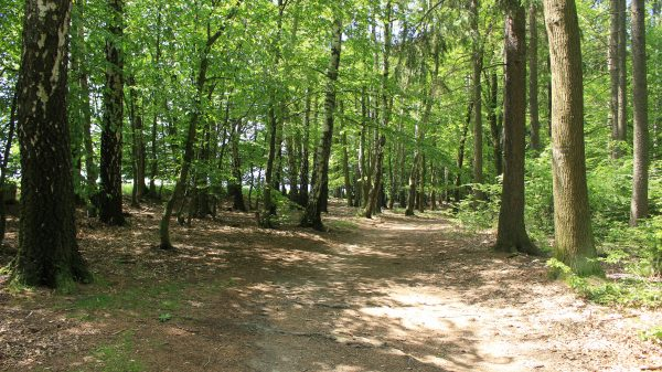 Withrow Nature Preserve Offers a Peaceful Forest Experience