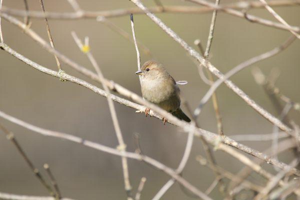 The 8 Best Places for Bird Watching in Cincinnati