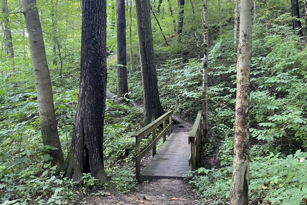 A Guide to Cincinnati's Ault Park