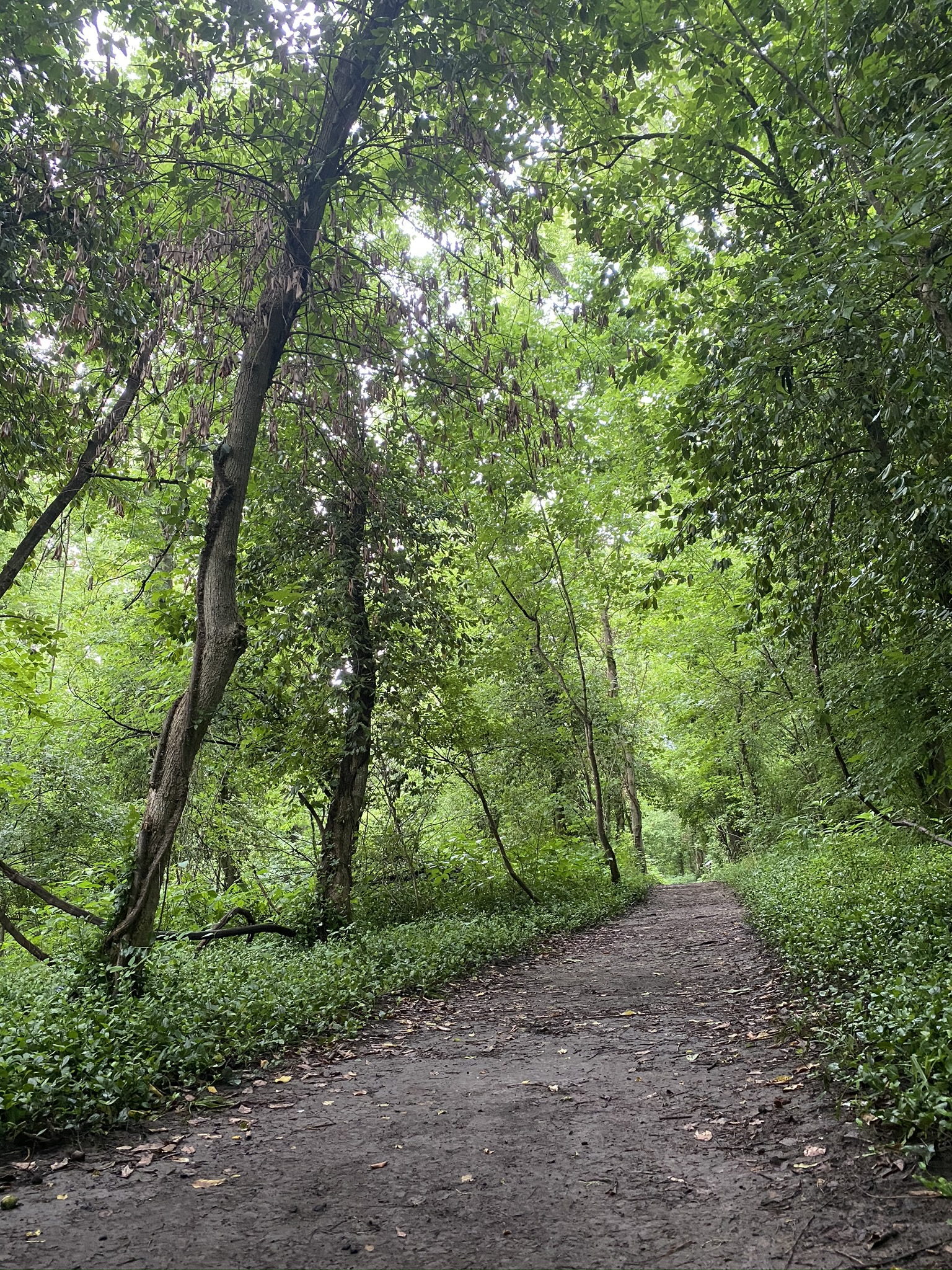 Hiking trail at East Loveland Nature Preserve in Loveland, Ohio